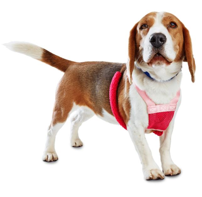 No Pull Dog Harness Reviews