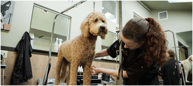 Grooming Can Help Keep Your Pet Healthy