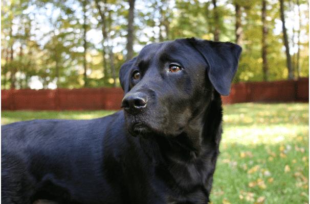 backyard ideas for dogs