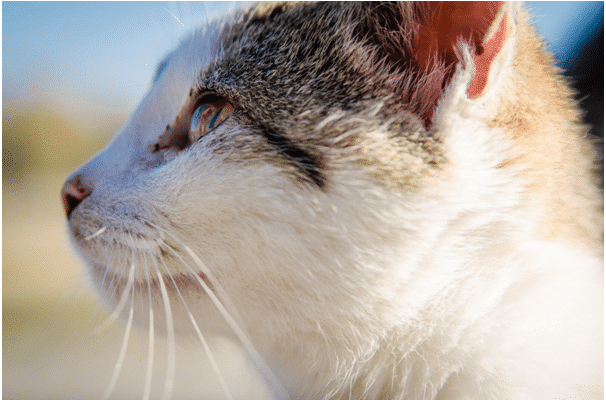 how to prevent utis in cats