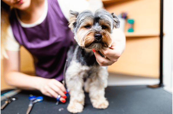 professional dog groomer