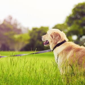 Herbal Antibiotics: Are Herbs Effective For Pets