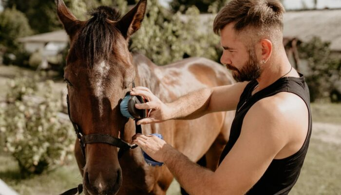 Horse Care Routine