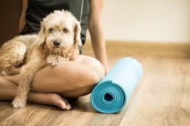 Pet Rehabilitation in Veterinary Care