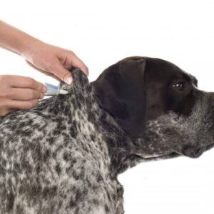A Pet Owners Guide To Advantage II Canada