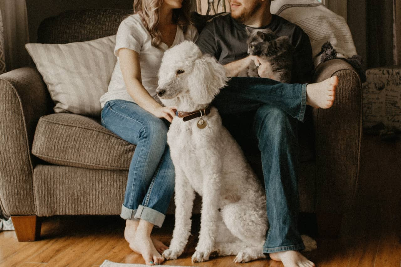 Turn Your Love For Pets Into A Lucrative Career