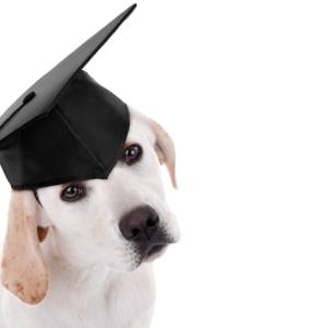 Hiring Dog Trainers